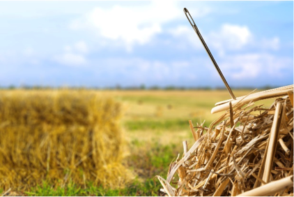 Top 6 Coach Finding Your Niche in the Haystack